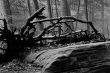 Upturned Roots