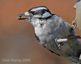 Woodpecker scores with two seeds