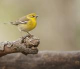 BIRDS_2010