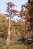 Central Arkansas - Fall 2007