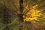 CRW_8624-leafblur.jpg
