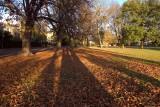 Pearson Park autumn002.jpg