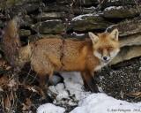 Tuscarora Wildlife & Scenes