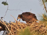 Baytown Bald Eagles -  Eaglets - Play - April 14, 2010