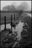 Danby Wiske - Mounstrall Lane