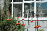 Combien voyez-vous de colibri ***** how many hummingbird in this picture ????