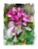 Bari's Flowers