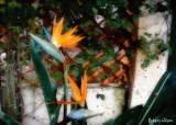 bird of paradise watercolor