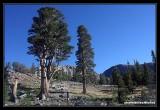 Yosemite08.jpg
