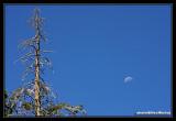 Yosemite40.jpg