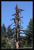 Yosemite42.jpg