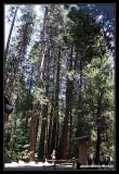 Yosemite55.jpg
