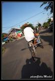 cyclop113.jpg