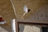 Wren nest Flys up w twig.jpg