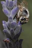 Bee fuz