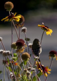 Bird, Bees, and Flowers