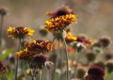 Ruffly Flowers
