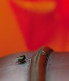 FlyButt on Planner