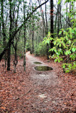 The trail to camp