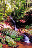 Waterfalls on Tributary of Anthony  Creek NC.