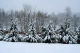 Anther Winter storm (2/5/10) So far 5 in. snow & up to 3/4in Freezing rain to night