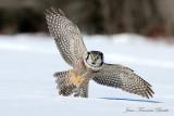 Oiseaux de proie   Birds of prey