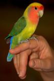 Freeport Parrot Show