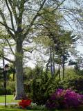 Bayard Cutting Arboretum