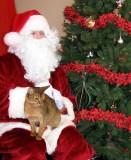 Enjoying Santa's cushy lap