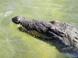 Punta Sur Ecological Park