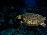 Turtle #2