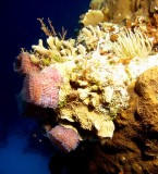 Sponges & an Anemone
