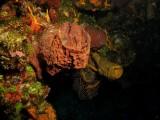 Barrel sponge & tube sponge