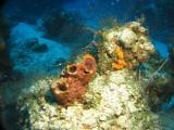 Tube sponges