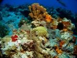 Sponges & corals