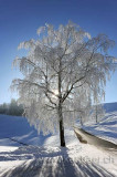 Rauhreif / Hoar Frost (91243)