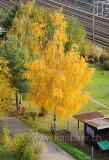 Herbst (91825)