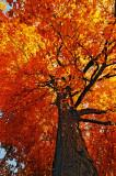 Tree at Fort Hunter
