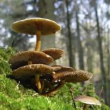 Champignons - Fungi