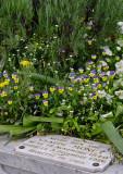 Monet's family Grave - Sépulture de la famille Monet