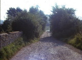 The Lane to Ivy Cottage 1964