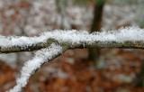 Snow On A Stick