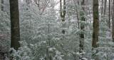 Tiny Pines