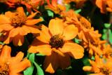 Edna's Flowers