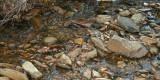 Pine Log Creek