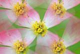 5 Blooms