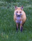 fox_family_2010_
