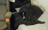 Ceatharlach all comfy