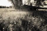 old shed platinum toned