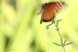 queen takes flight